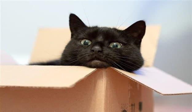 Примета чёрный кот при переезде